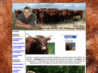 Elevage de vaches salers
